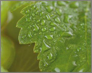 Caudalie Vinosource SOS Thirst Quenching Serum -2