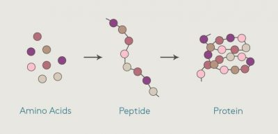 peptides-1